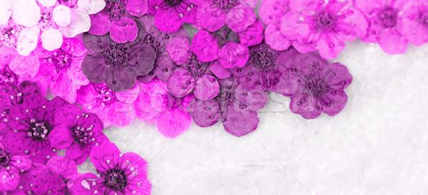 装飾的な モンタージュ カラフル 春の花 マゼンタ ストックフォト © Nneirda