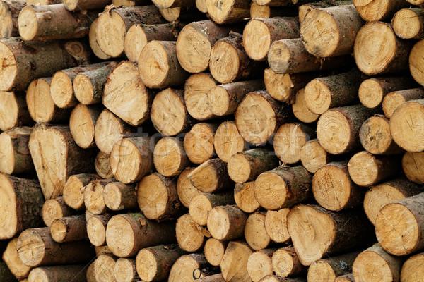 Foto plaats bos boom bouw industrie Stockfoto © Nneirda