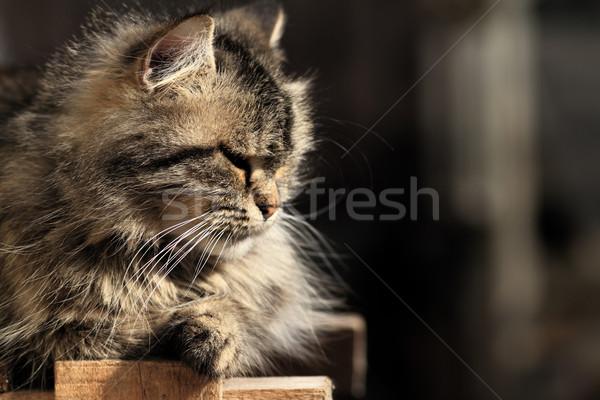 Сток-фото: кошки · расслабляющая · саду · улыбка · лице · волос