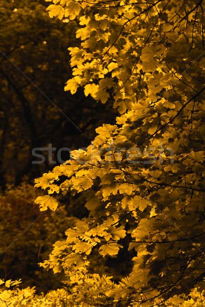 Oranje blad foto bladeren boom voorjaar Stockfoto © Nneirda