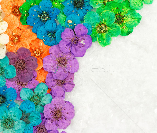 Dekoratív montázs színes aszalt tavaszi virágok lila Stock fotó © Nneirda