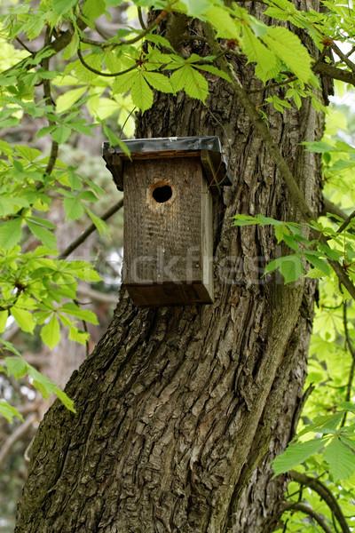 Tree trunk Stock photo © Nneirda