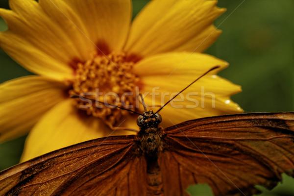 Naranja mariposa flor luz del sol sol hoja Foto stock © Nneirda
