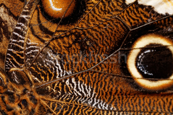 Macro photograph of a butterfly wing Stock photo © Nneirda