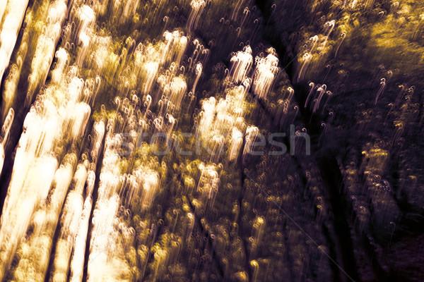 Blurred trees background Stock photo © Nneirda