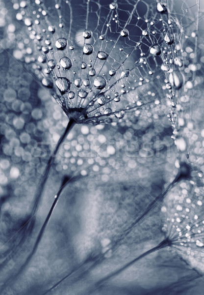 Plant seeds with water drops Stock photo © Nneirda