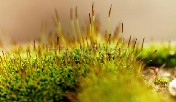 Yeşil yosun fotoğraf yaprak bahçe Stok fotoğraf © Nneirda