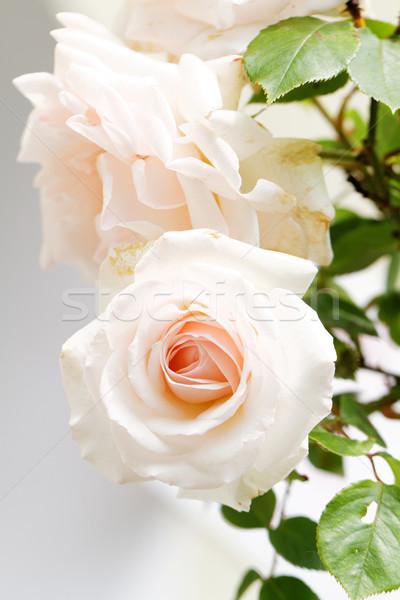 Parlak bahçe güzel çiçekler Stok fotoğraf © Nneirda