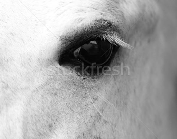 Részlet fehér ló fej hosszú szempilla természet Stock fotó © Nneirda