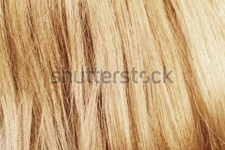Blond hair  Stock photo © Nneirda