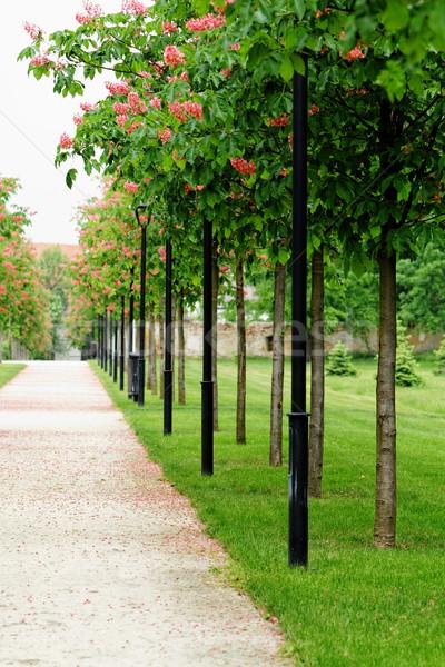 каштан дерево путь природы красоту области Сток-фото © Nneirda