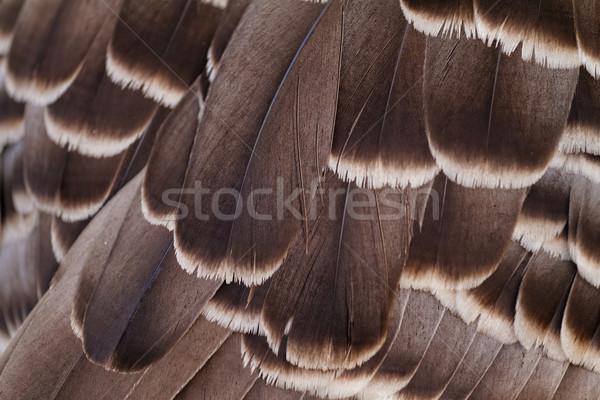 Feathers Stock photo © Nneirda