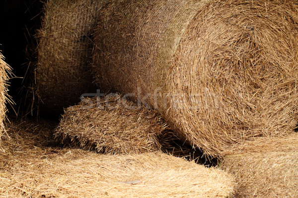 Hooi veld detail shot groot Stockfoto © Nneirda