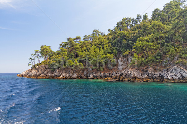 Groene eiland foto mooie zee bos Stockfoto © Nneirda