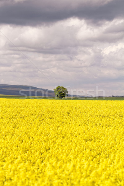Foto stock: Campo · cielo · nubes · flor · primavera · sol