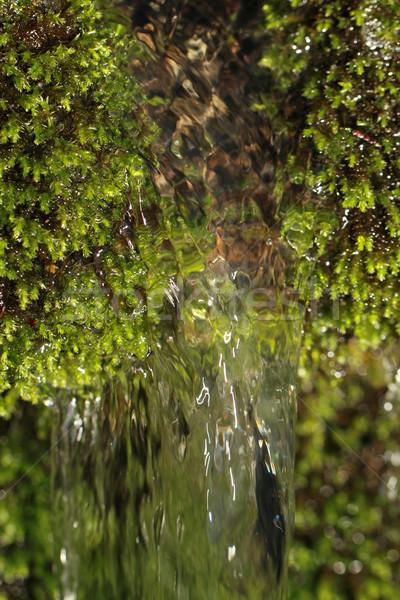 Taze yosun makro yeşil doğa su Stok fotoğraf © Nneirda