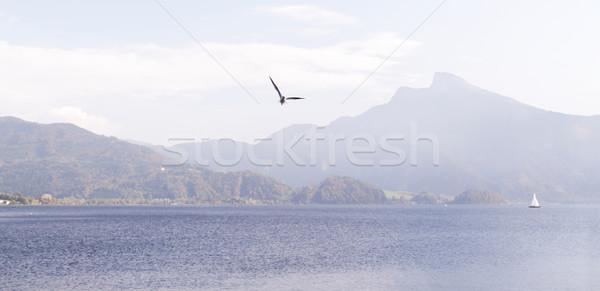 Gabbiano foto lago acqua pesce natura Foto d'archivio © Nneirda