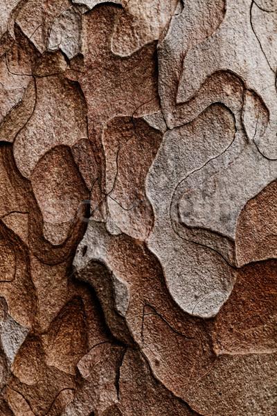 Textura macro pinheiro ver Foto stock © Nneirda
