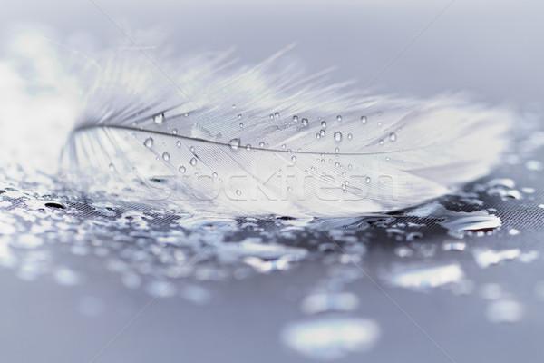 Beyaz tüy su damlası mavi su kuş Stok fotoğraf © Nneirda