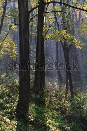 Autumn forest Stock photo © Nneirda