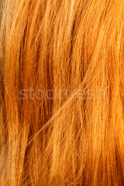 Cheveux blonds blond cheveux texture photo Photo stock © Nneirda