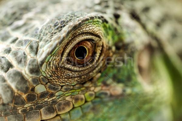 Zöld iguana makró fantasztikus szem kék Stock fotó © Nneirda