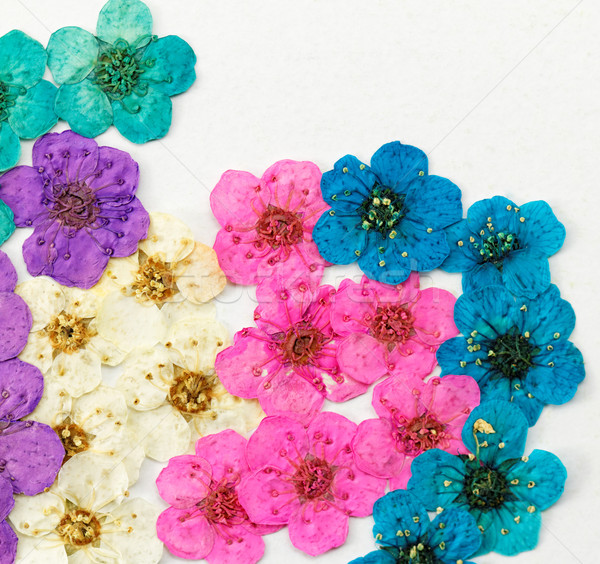 Decorative montage compilation of colorful dried spring flowers Stock photo © Nneirda