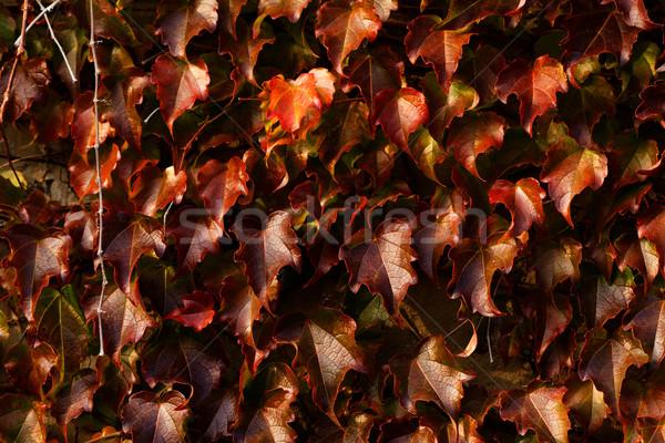 Hojas foto hoja jardín fondo Foto stock © Nneirda