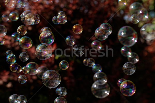 Soap bubbles Stock photo © Nneirda