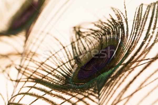 Pavão belo abstrato pássaro Foto stock © Nneirda