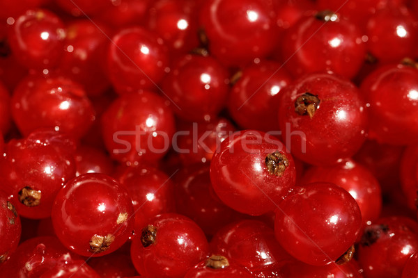 Background red currants Stock photo © Nneirda
