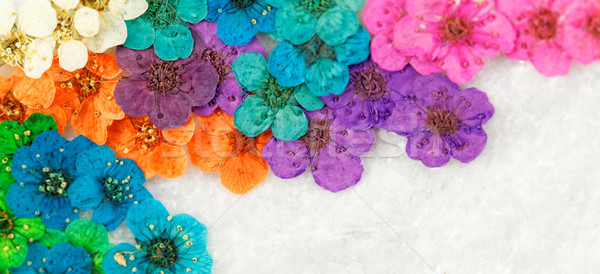 Colorful dried spring flowers Stock photo © Nneirda