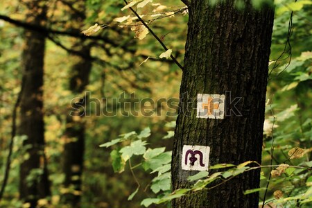 Hike sign Stock photo © Nneirda