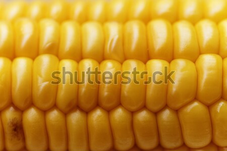 Corn background Stock photo © Nneirda