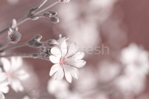 Fehér virág fehér kő virágoskert közelkép fotó Stock fotó © Nneirda