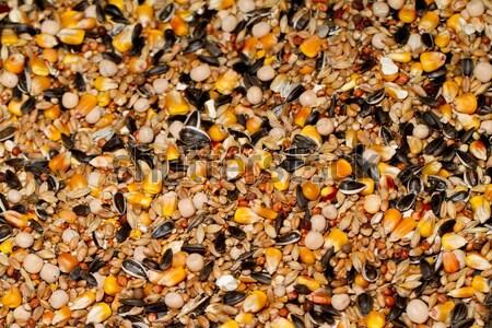 Sementes comida mouse fundo branco animal Foto stock © Nneirda