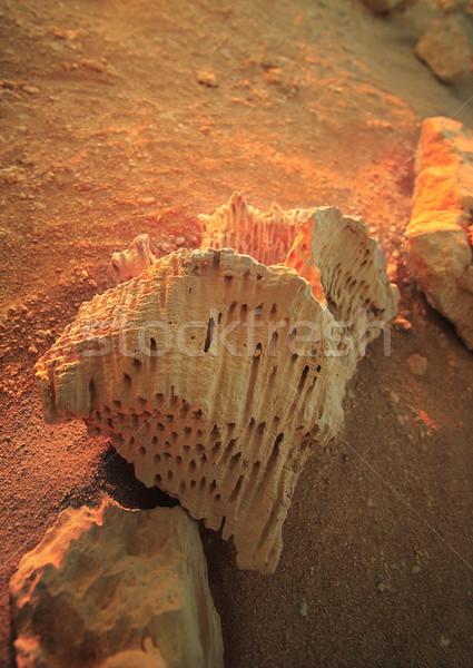 Kövület részlet nap absztrakt narancs homok Stock fotó © Nneirda