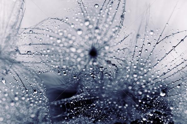 Növény magok vízcseppek absztrakt makró fotó Stock fotó © Nneirda