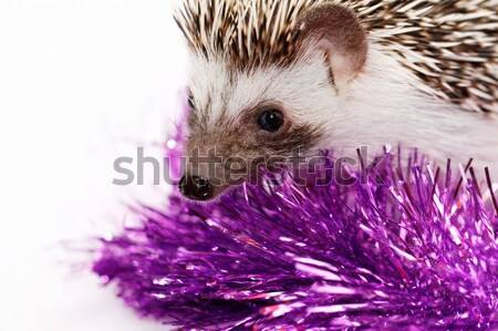 A cute little hedgehog - ( African white- bellied hedgehog ) Stock photo © Nneirda