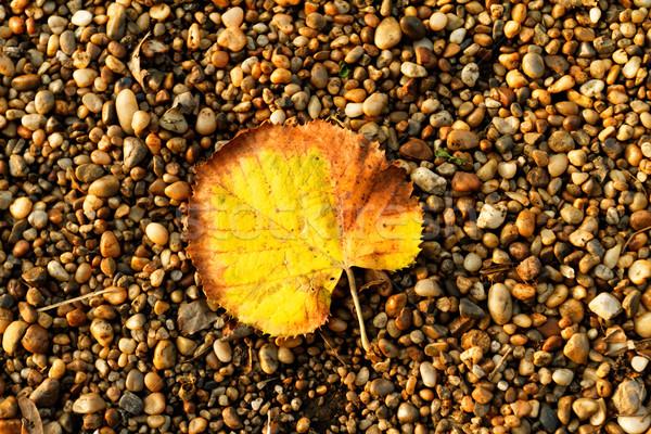 Leaf on pebbles Stock photo © Nneirda