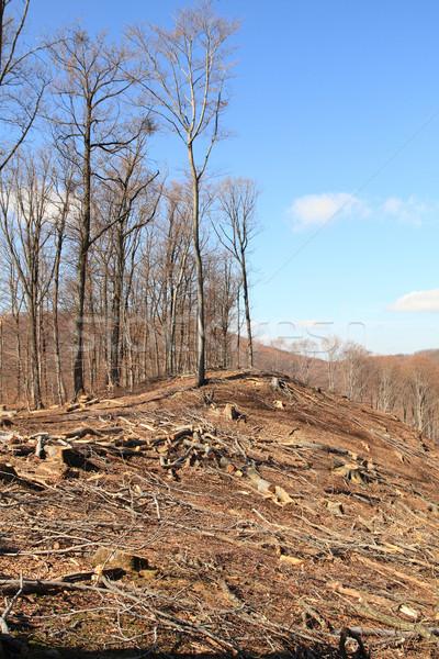 Logging Stock photo © Nneirda
