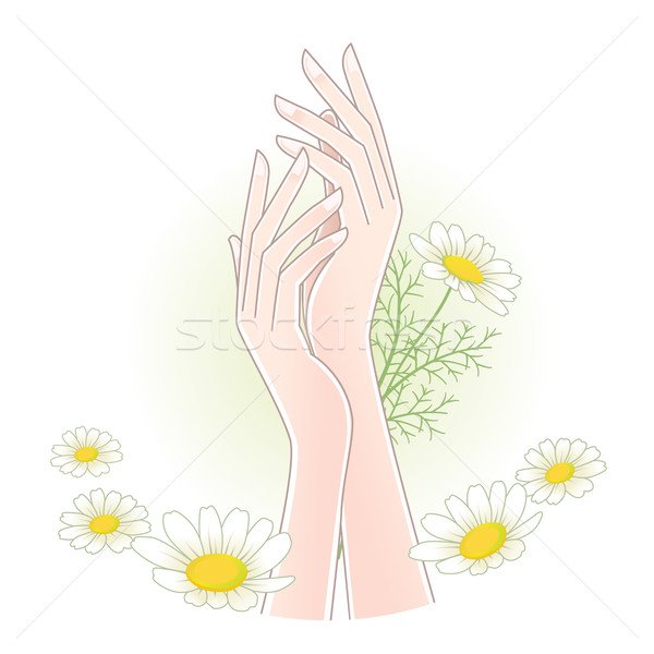 Piękna ręce rumianek kwiaty odizolowany maska Zdjęcia stock © norwayblue