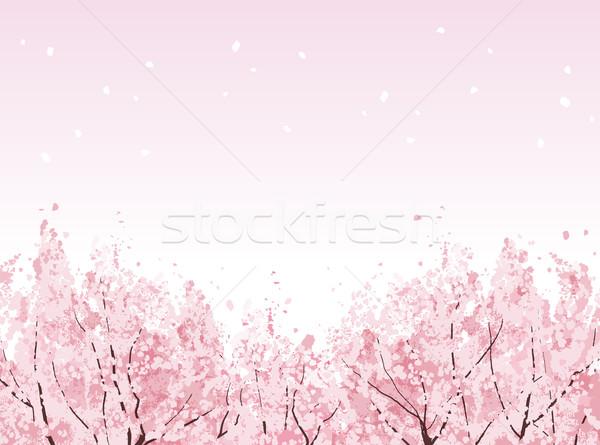 полный цвести красивой Cherry Blossom деревья файла Сток-фото © norwayblue