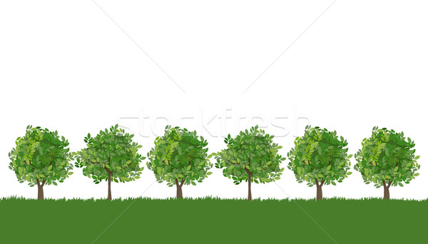 Line of trees on lush grass Stock photo © norwayblue