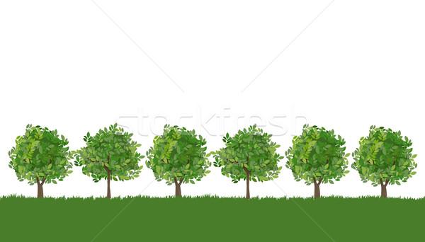 Line drzew bujny trawy drzewo lasu Zdjęcia stock © norwayblue