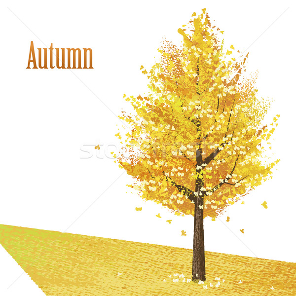 Gingko with golden leaves in late autumn Stock photo © norwayblue