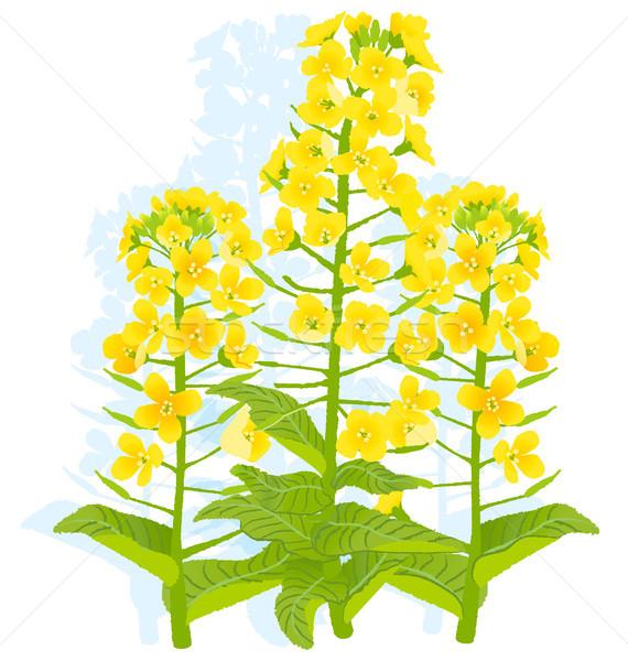 Flores ilustração branco eps10 natureza fundo Foto stock © norwayblue