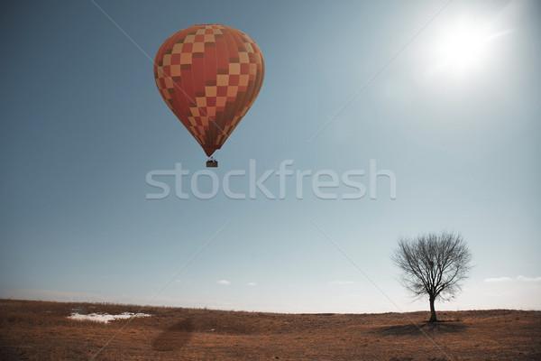 Air balloon and tree Stock photo © Novic