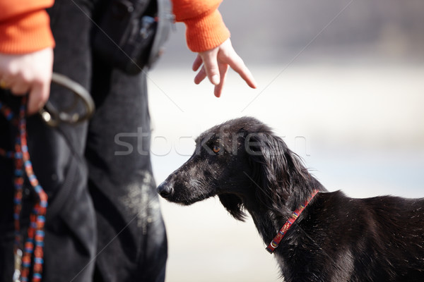 Stock photo: Dog and trainer