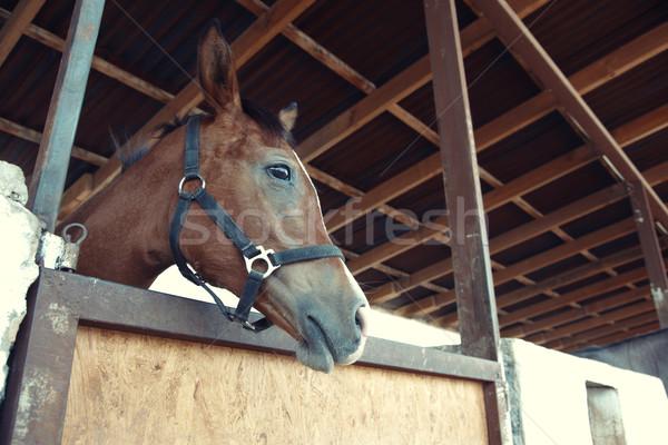 Horse Stock photo © Novic